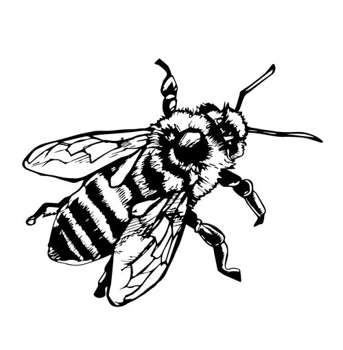 Line Art Bee : Honey bee drawings bing images rug ideas pinterest