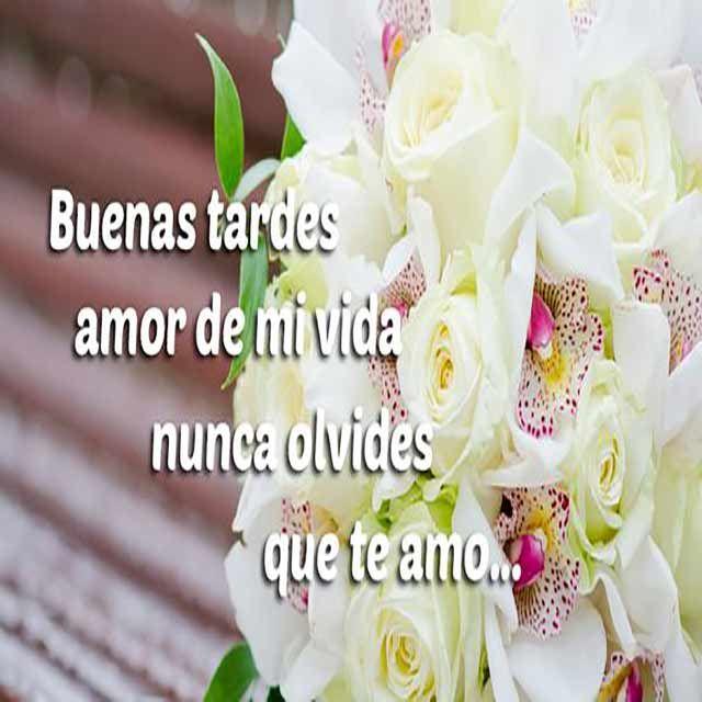 Buenas Tardes Amor Imagenes Postales Y Frases Para Compartir