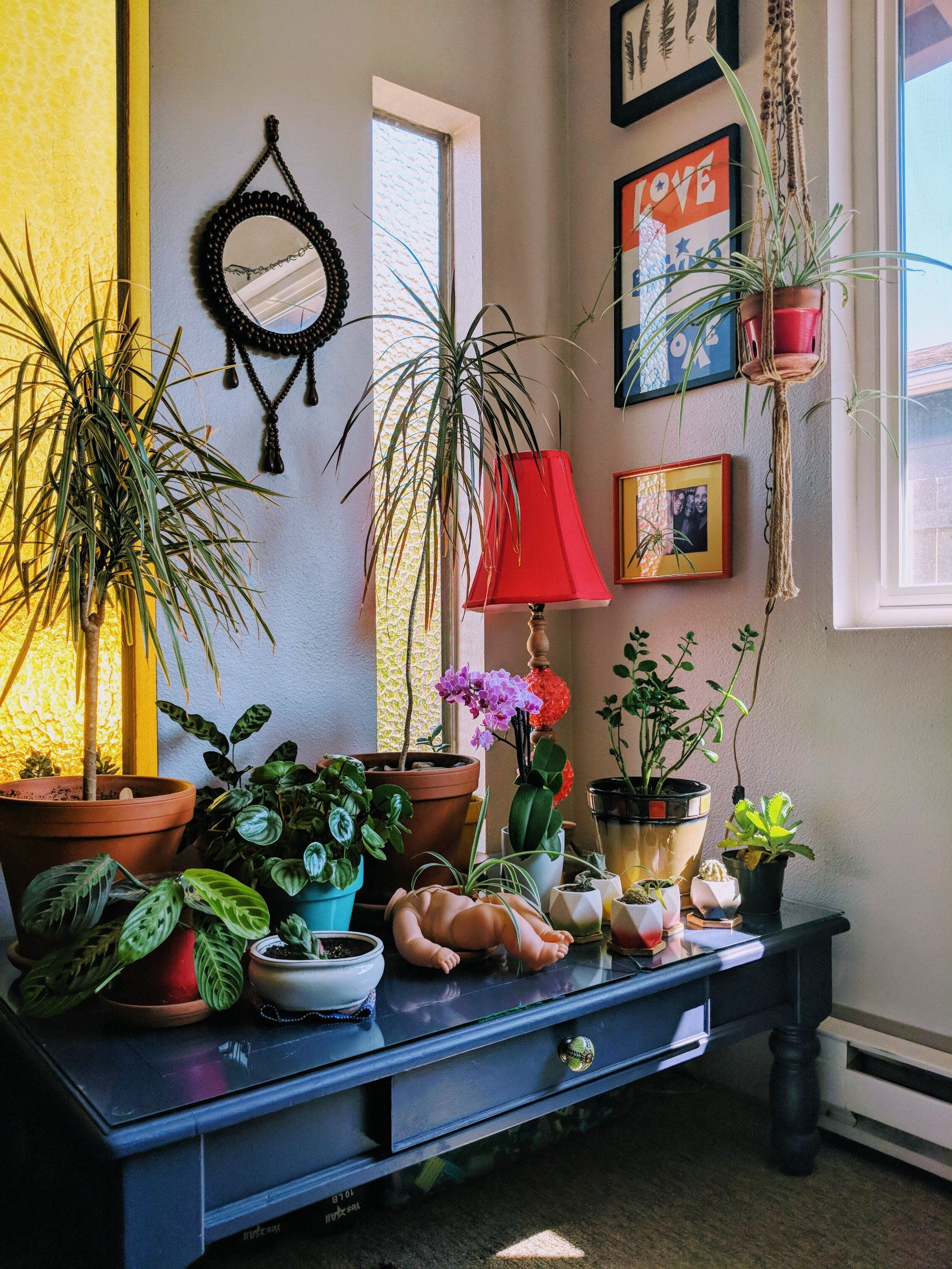 my favorite sunny little corner of my apartment in on sweet dreams for your home plants decoration precautions and options id=64599