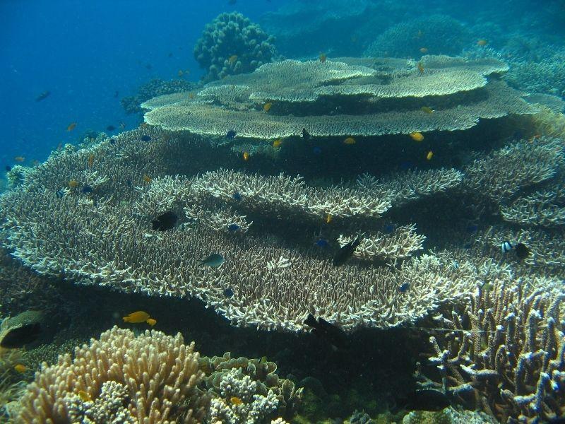 Photogallery - Underwater RENEWED - Magic Island
