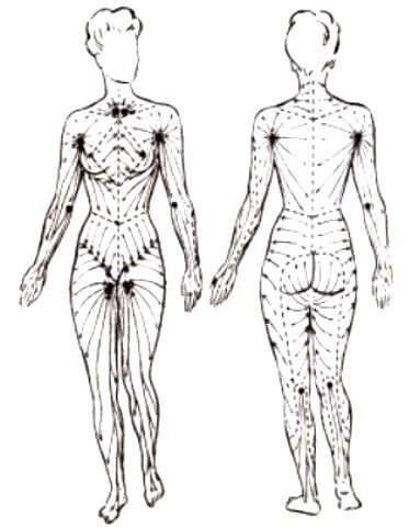 Lymphatic System Lymphatic Massage Therapy Medical