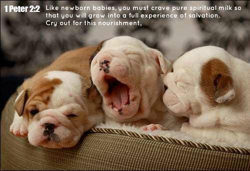 1 Peter 2 2 Like Newborn Babies You Must Crave Pure Spiritual