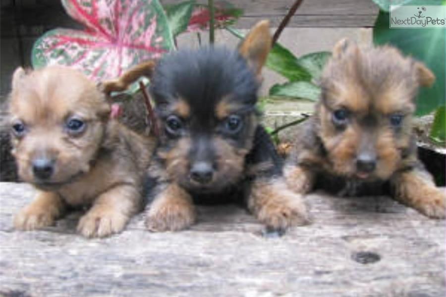 Missouri Puppy Mill Rescue Home Facebook