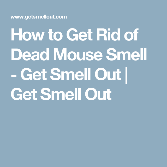 Getting Rid Of Dead Mouse Smell In Car