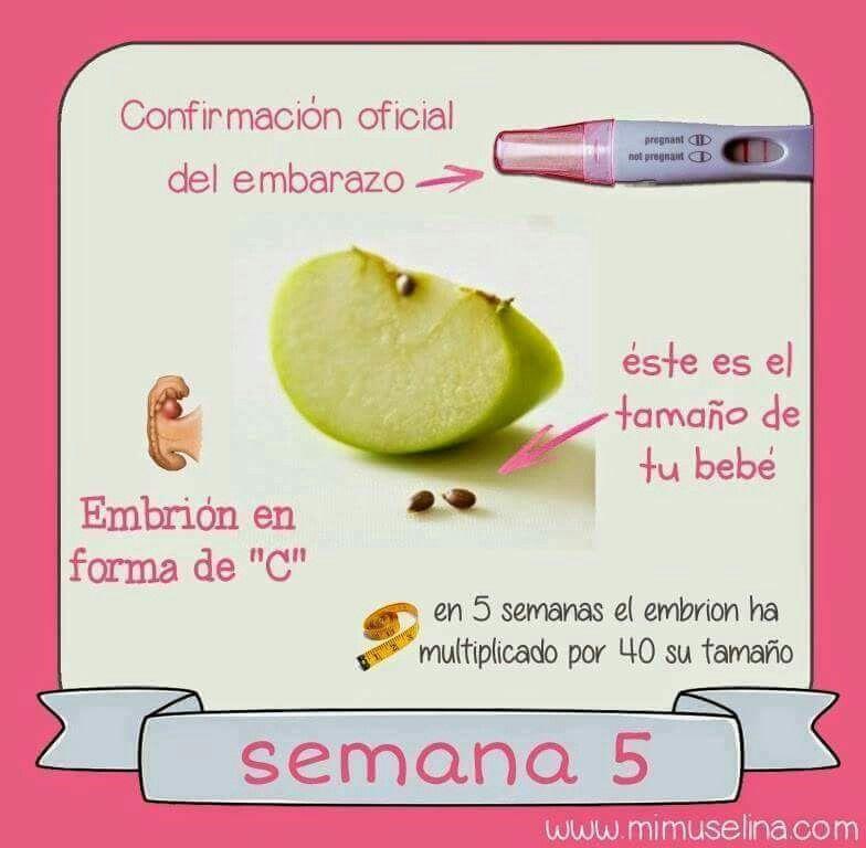 Pin On El Embarazo Semana A Semana