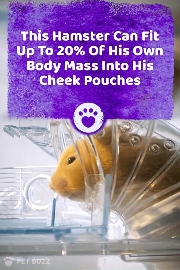 7120200ea0aa1824d0c804d3c5ebe629 - How To Get Food Out Of Hamster S Cheeks