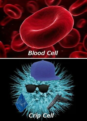 Bloods Vs  Crips | Quotes and Thoughts | Best funny pictures, Very