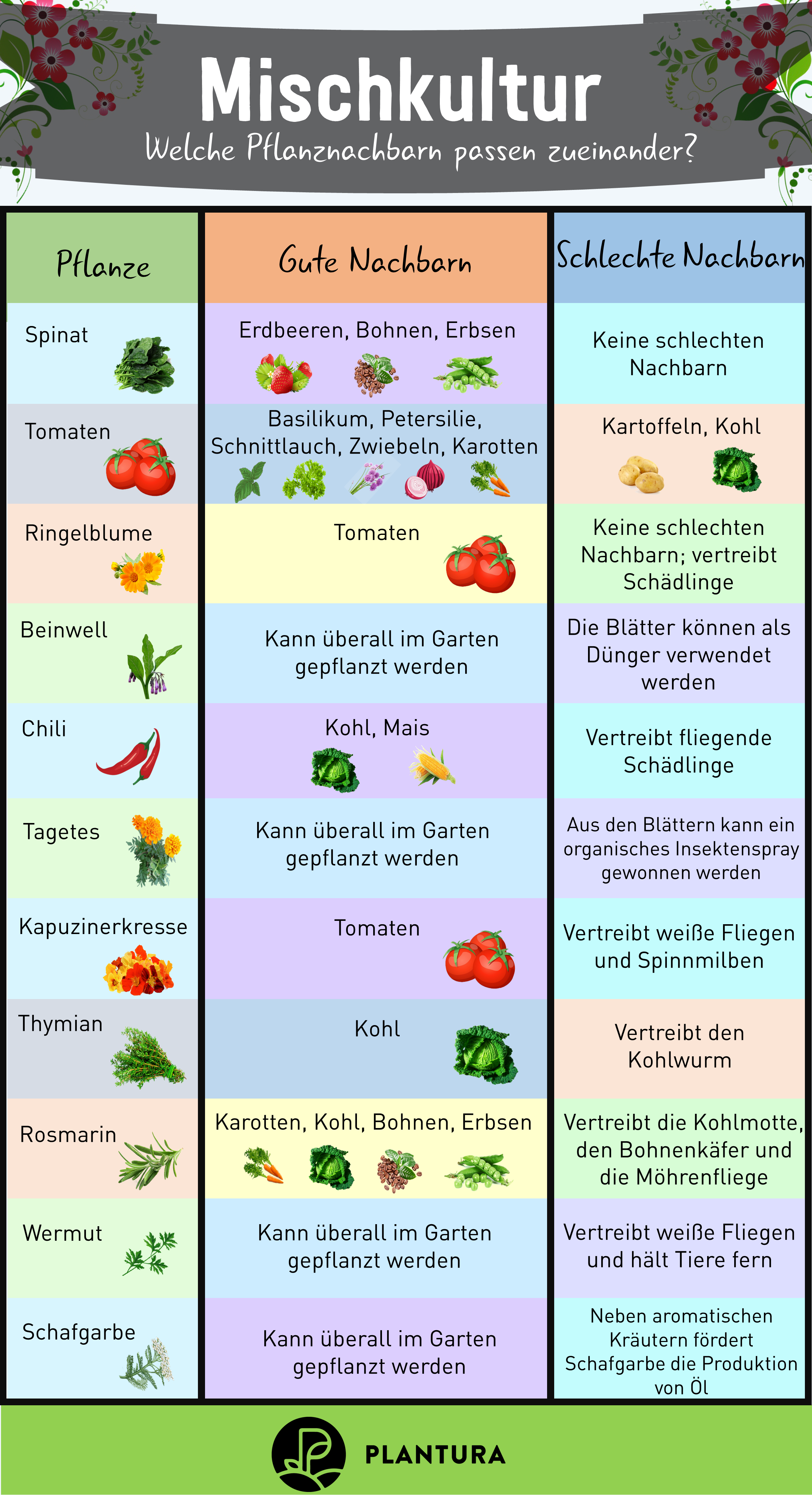 Plantura - nachhaltiges Gärtnern für alle -  Mischkultur: Welche Pflanzen passen gut zusammen? Nicht jede Pflanze versteht sich gut mit ihren Na - #alle #für #gartnern #nachhaltiges #plantura