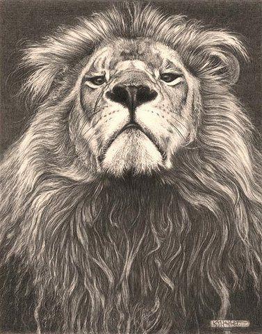 Cabeza de la Familia  Len  Dibujos de Lpiz de Arte Finos www