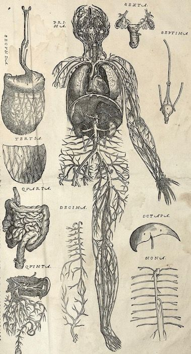 Veins and arteries of a human being, surrounded by other body features. Andreae Vesalii Bruxellensis, scholae medicorum Patauinae professoris, suorum de humani corporis fabrica librorum epitome. ...