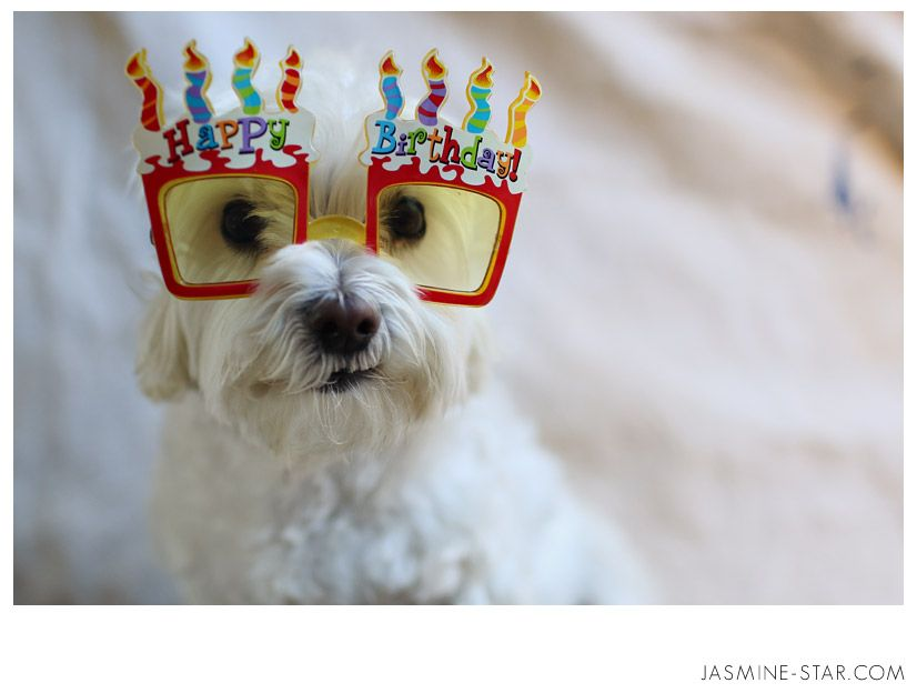 Happy Birthday Dog Quotes ~ Happy birthday photography google search