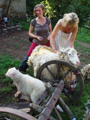 d918800e8 strihanie oviec a kolovrat casopis na obrodu rodnej kultúry a prírodného  života a duchovna
