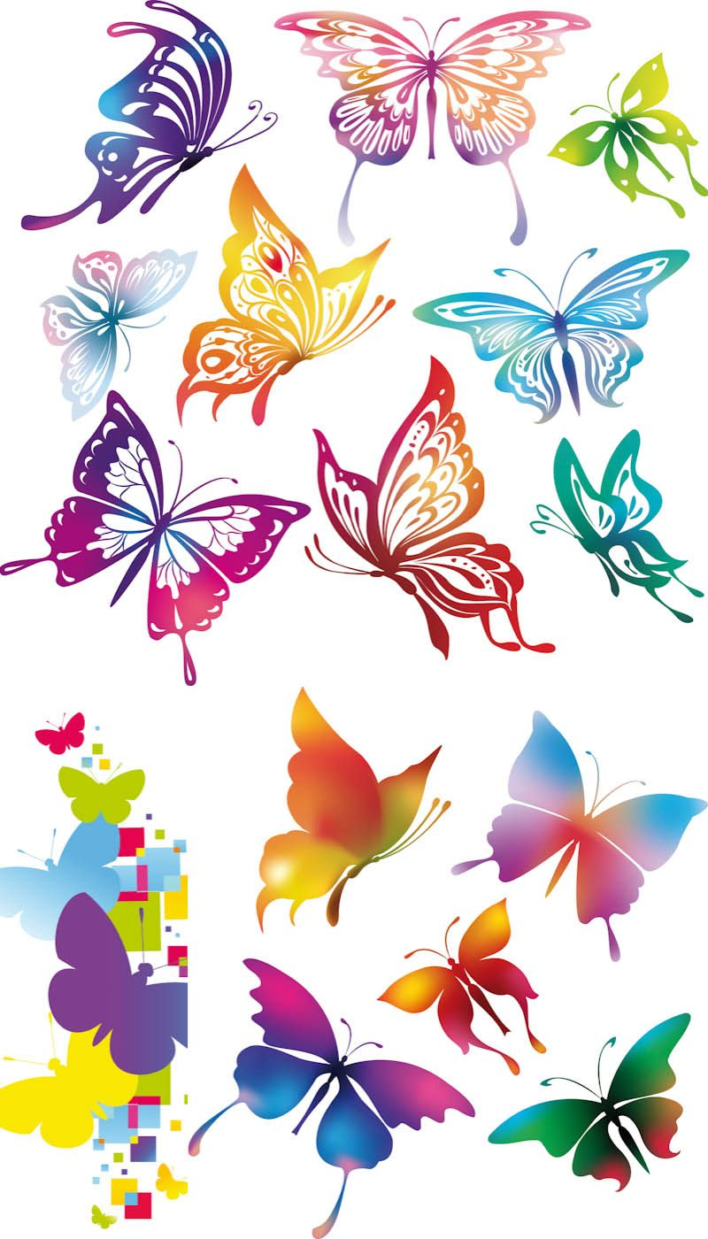 Colorful Butterflies Vector Butterfly Drawing