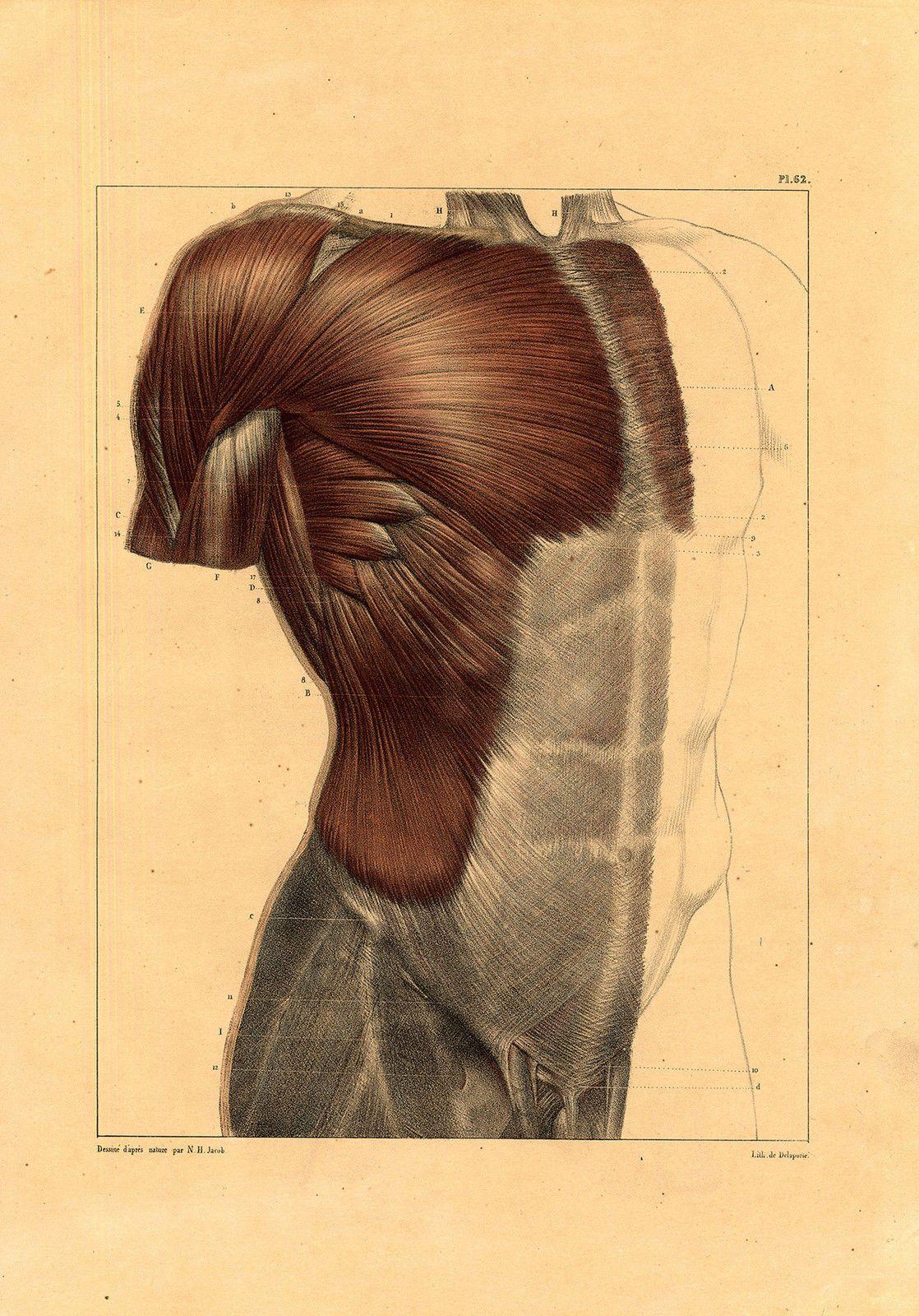 Pin von Lasse Kulmalahti auf Anatomia | Pinterest