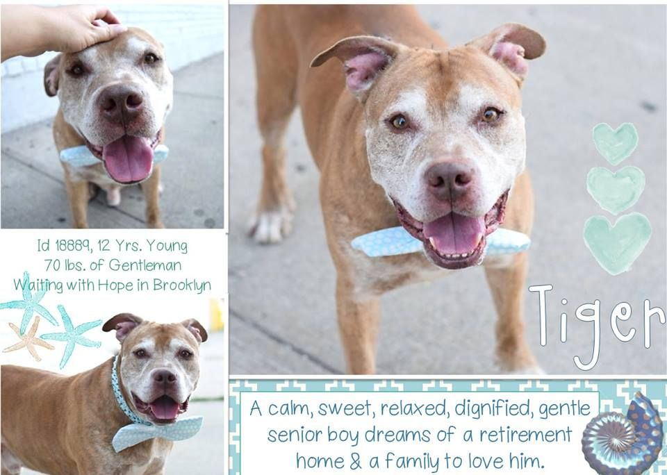 Image May Contain Dog And Text Dogs Nyc Dogs Dog Adoption