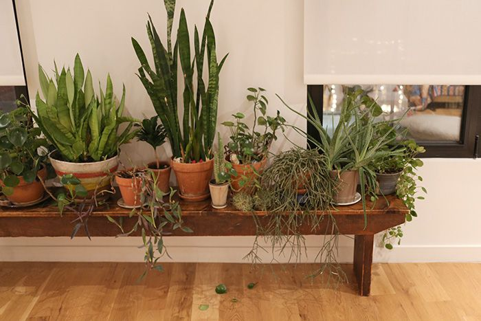 Lovely Collection Of Potted Plants Displayed On Vintage Wooden