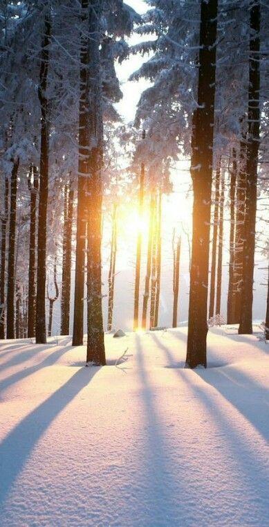 Am schönsten ist der Winter, wenn man die Schneelandschaft im Sonnenschein geni... #winterlandscape Am schönsten ist der Winter, wenn man die Schneelandschaft im Sonnenschein geni... -  - #Der #die #geni #ist #man #Schneelandschaft #schönsten #Sonnenschein #wenn #Winter #winterlandscape