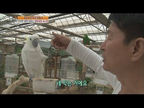 [Live Tonight] 생방송 오늘저녁 233회 - Terrified whenever see owner,Parrot's circumstance 201510021 - YouTube
