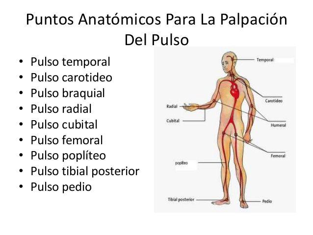 TIPOS DE PULSO ARTERIAL EBOOK