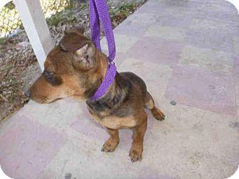 Pin By Lisa A On Puppy Alert Pets German Shepherd Dogs
