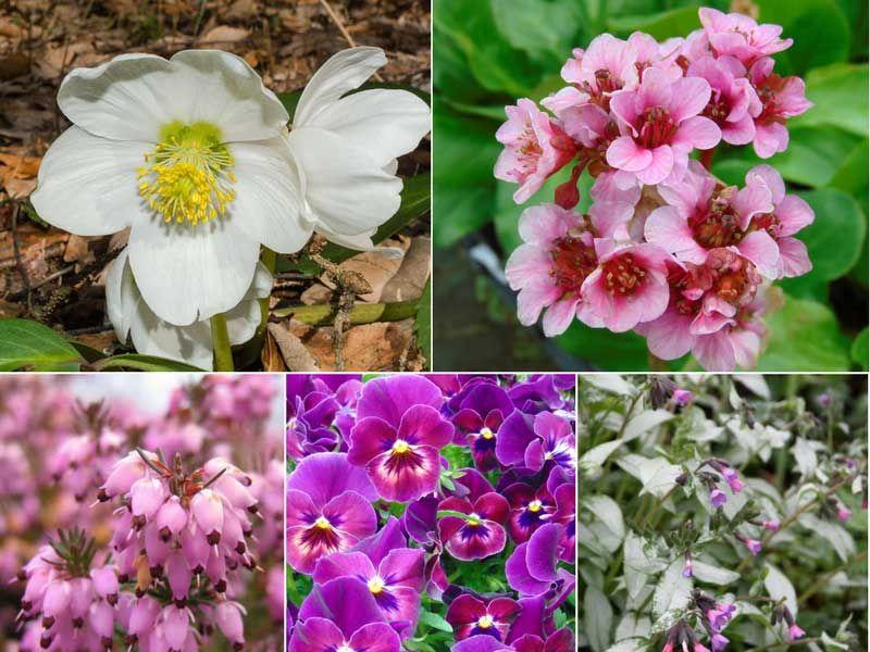 Fleurir Votre Jardin En Hiver Jardins Jardin D Hiver Et Fleur