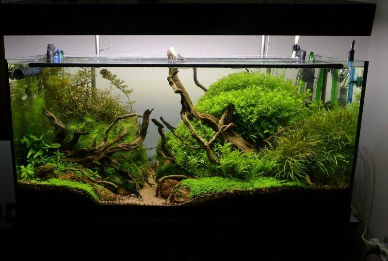 deko fur aquarium selber machen, deko für aquarium selber machen – 30 kreative ideen | aquariums and, Design ideen