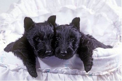 Double dose of cuteness!