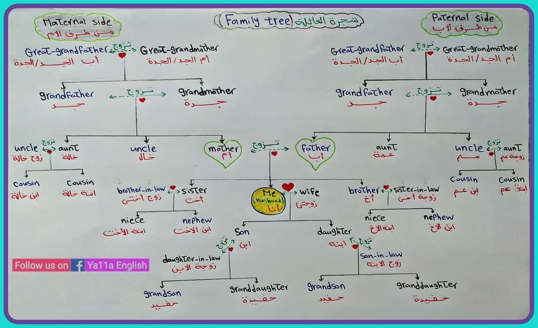 أفراد العائلة Family Members Aunt Uncle Step Mother Family Tree