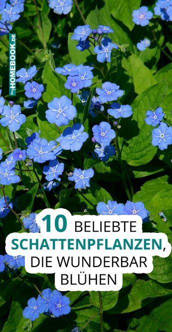 10 Schattenpflanzen, die wunderbar blühen