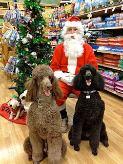 The Poodles Visit Santa At Petco In Palm Springs Poodle Puppy Poodle Christmas Animals