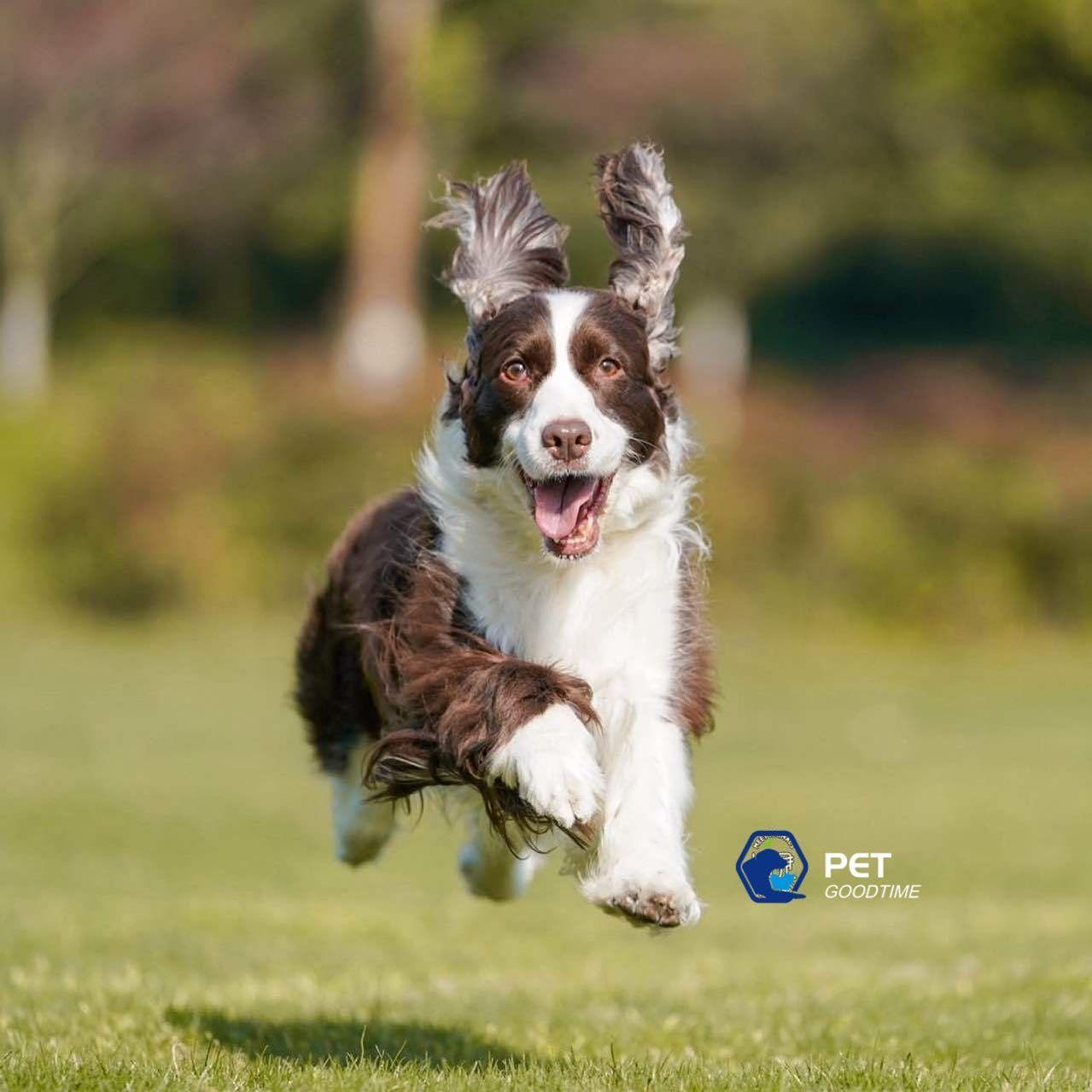 Running in the sunshine  #doglife #dogsofinstagram #dogstagram #dogphotography #dogofinstagram #dogstyle #dog #petsofinstagram #petphotography #dogwalking #petlovers