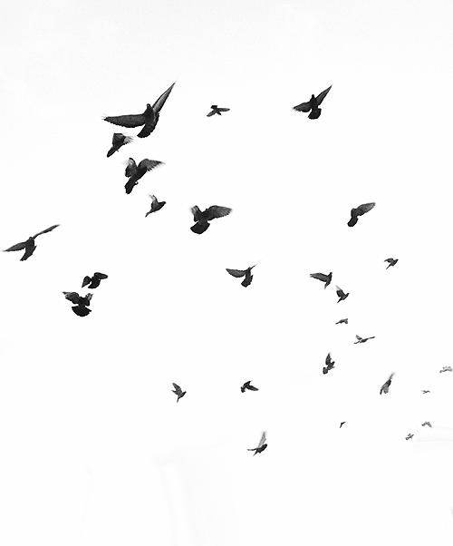 A Light Into My Soul Art Birds Flying Drawings