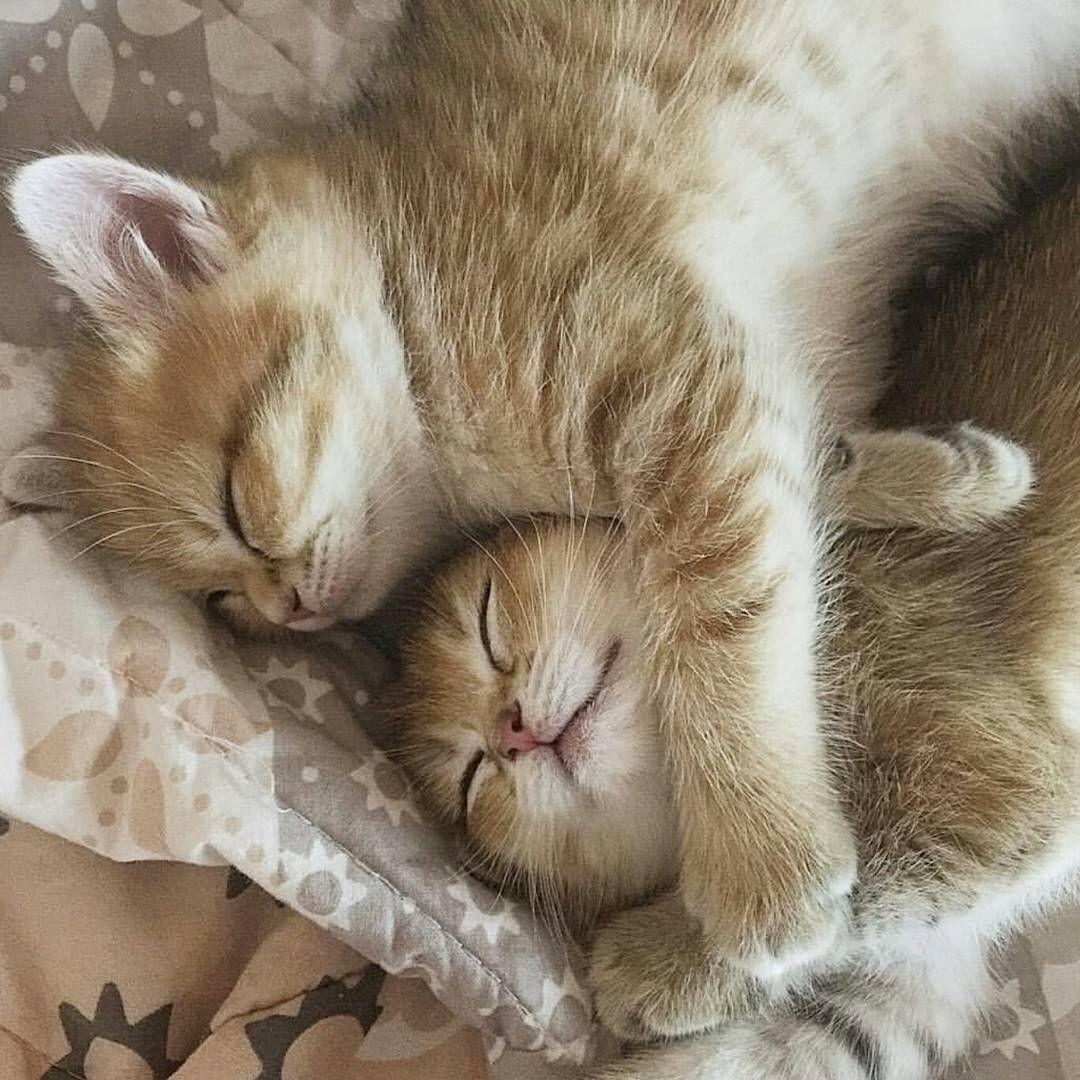 Гиф, сладких снов котик открытки