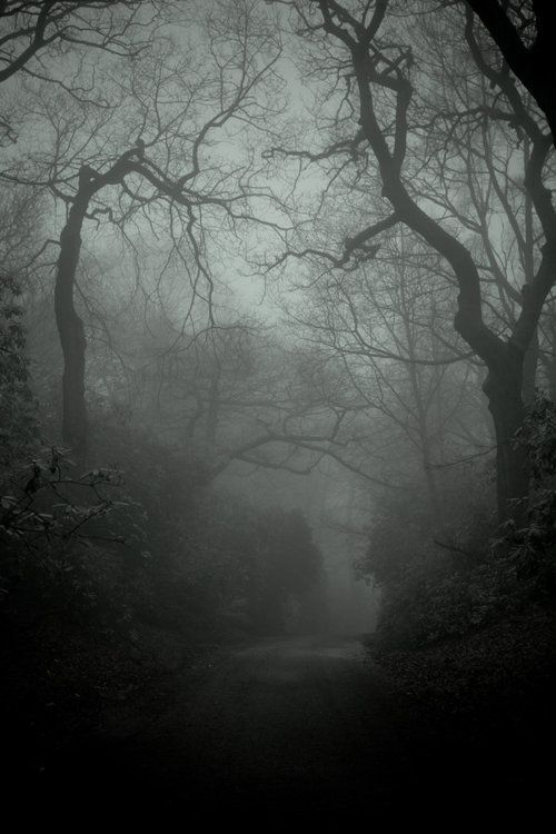 I Would Like To Walk Here Nature Dark Forest Scenery