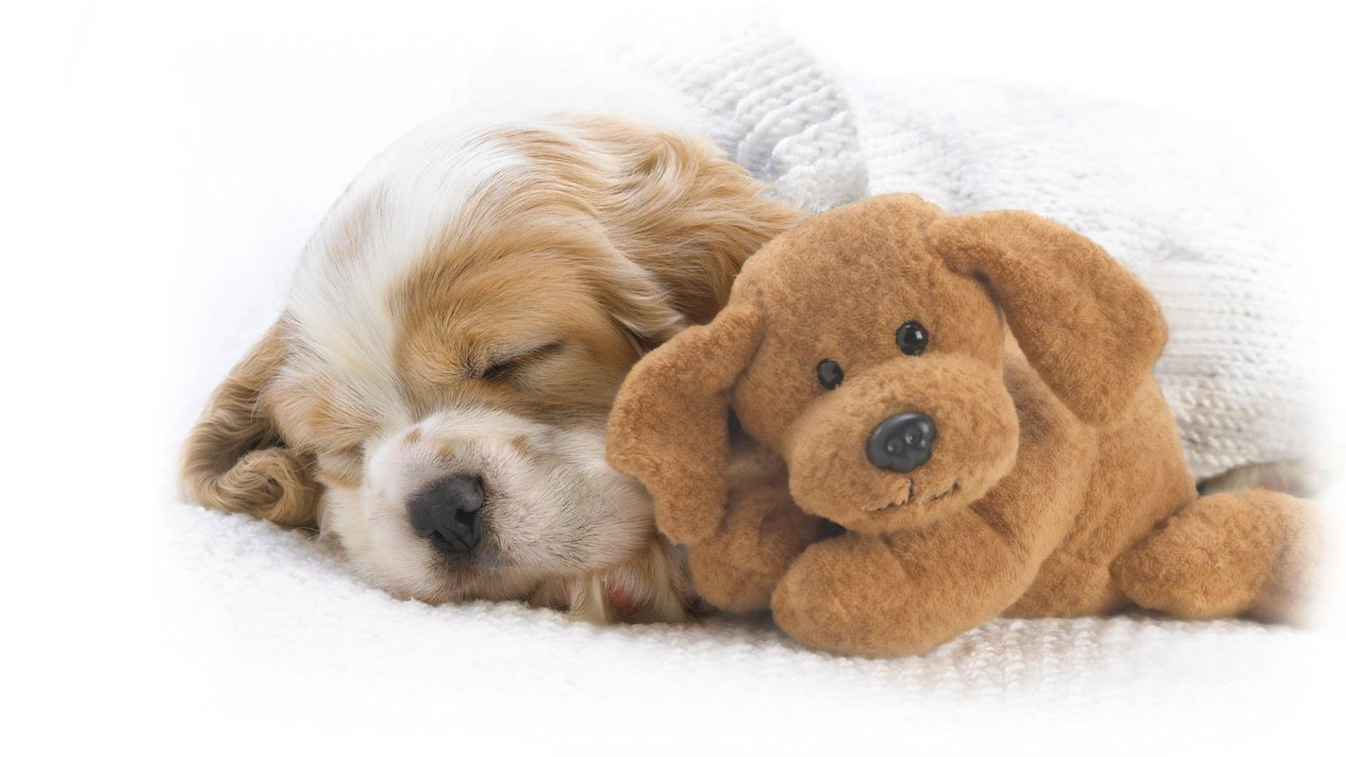 Puppy sleeping cute toy wallpaper x need iphone s plus