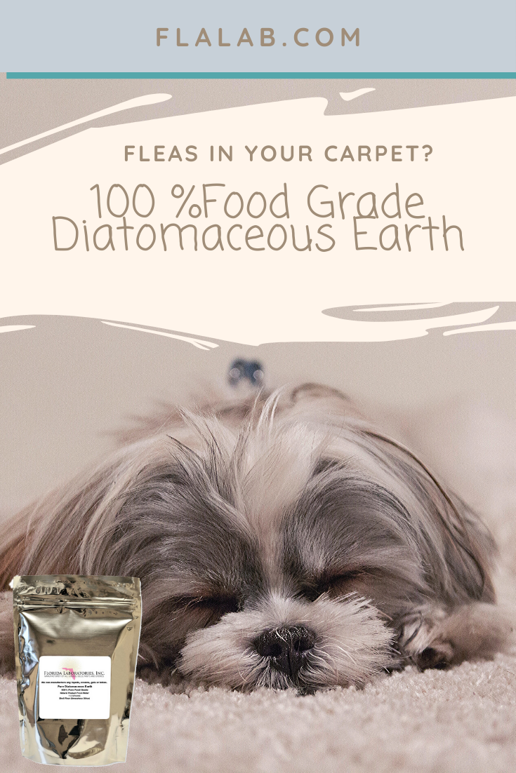 Confined to your home with Fleas? Get Rid of them with