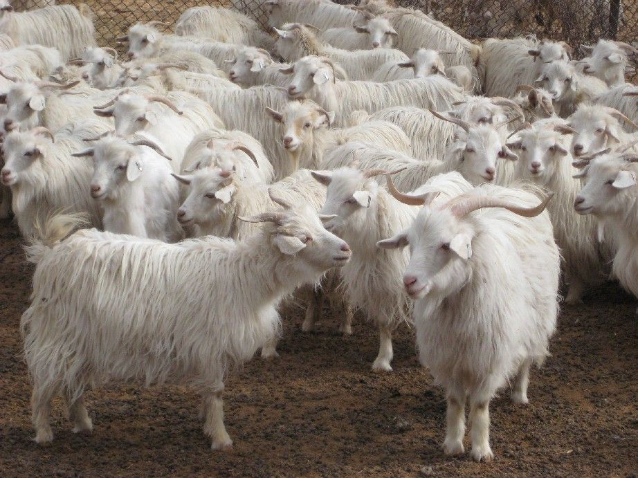 For the Fabric Nerd: Wool Fiber Types