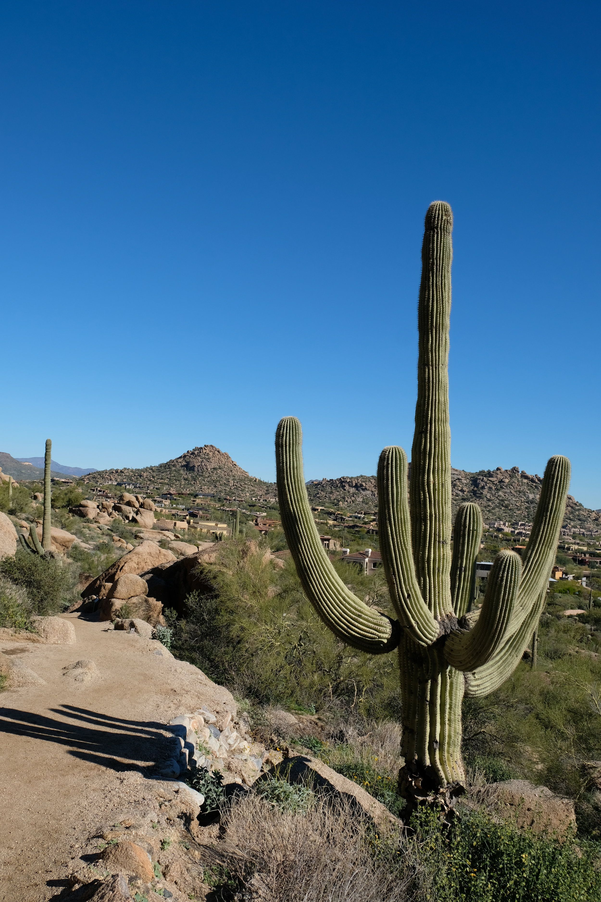 Heat Beating Desert Adaptations of the Cactus Desert