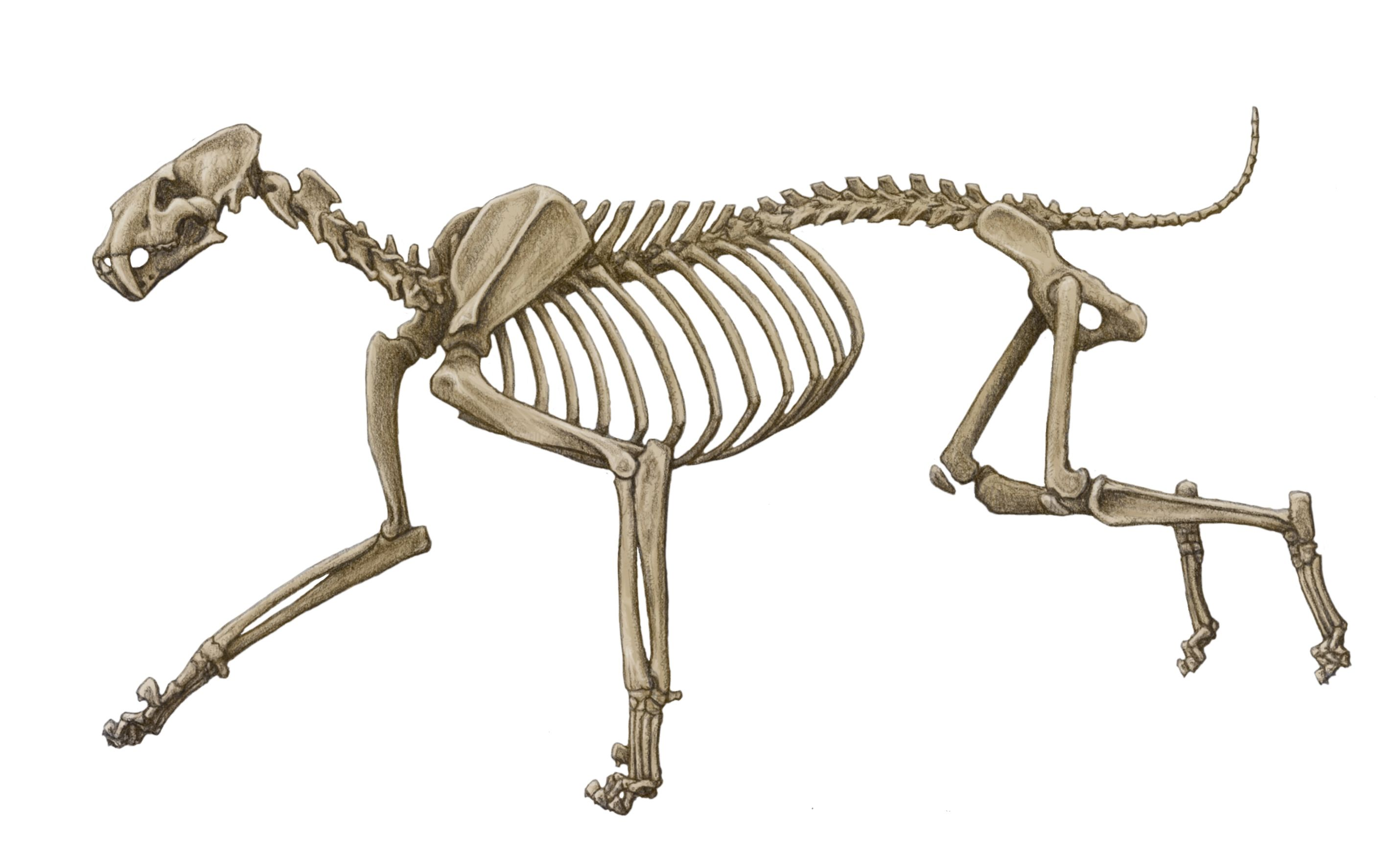 how to draw grim the skeleton dog