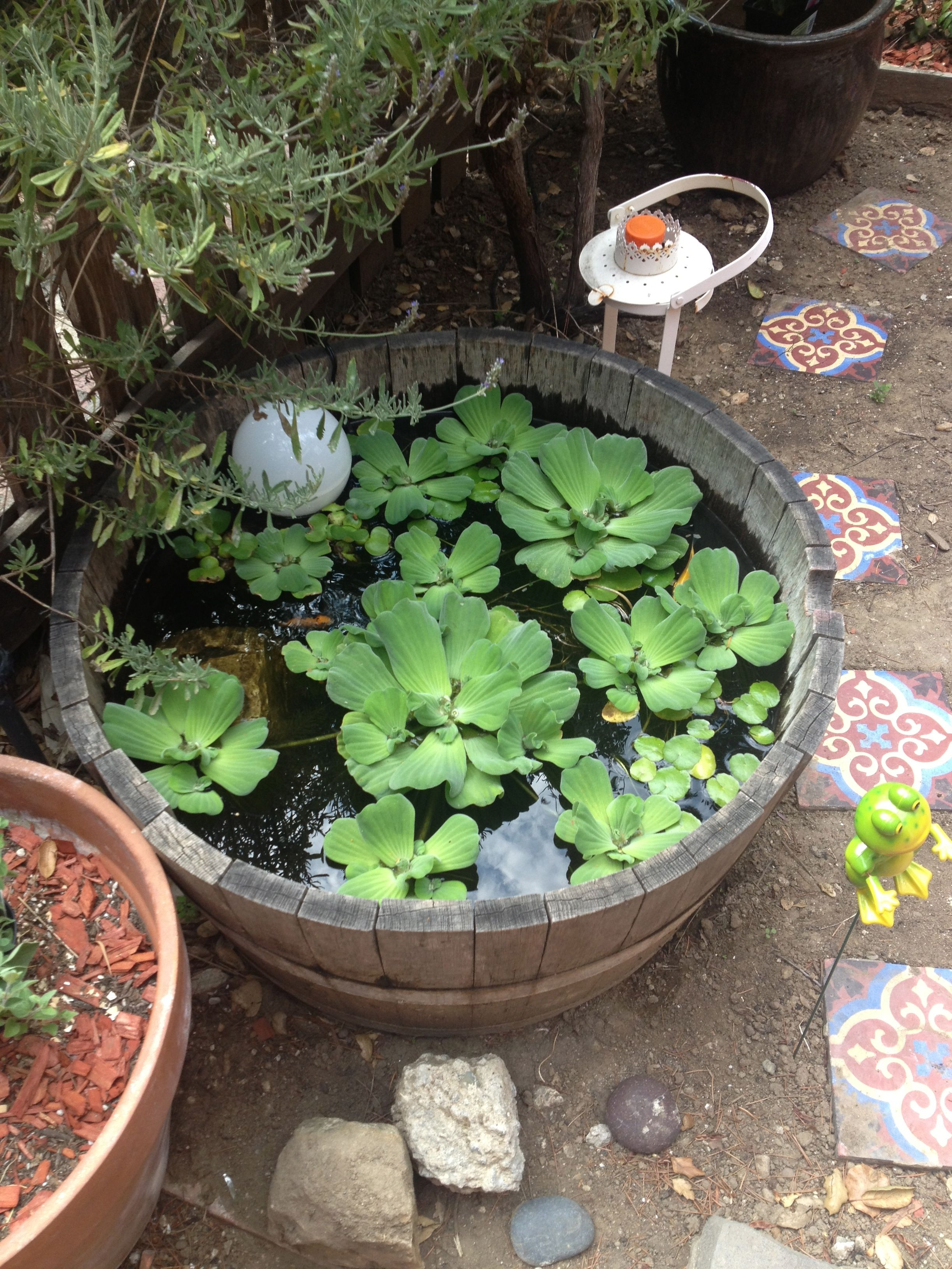 Wine barrel koi pond garden pinterest container for Fish pond features