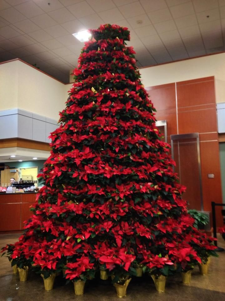 Poinsettia Christmas Tree | Elegant christmas trees ...