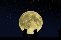 Silueta de dos gatos en el tejado de la casa, mirando la luna.
