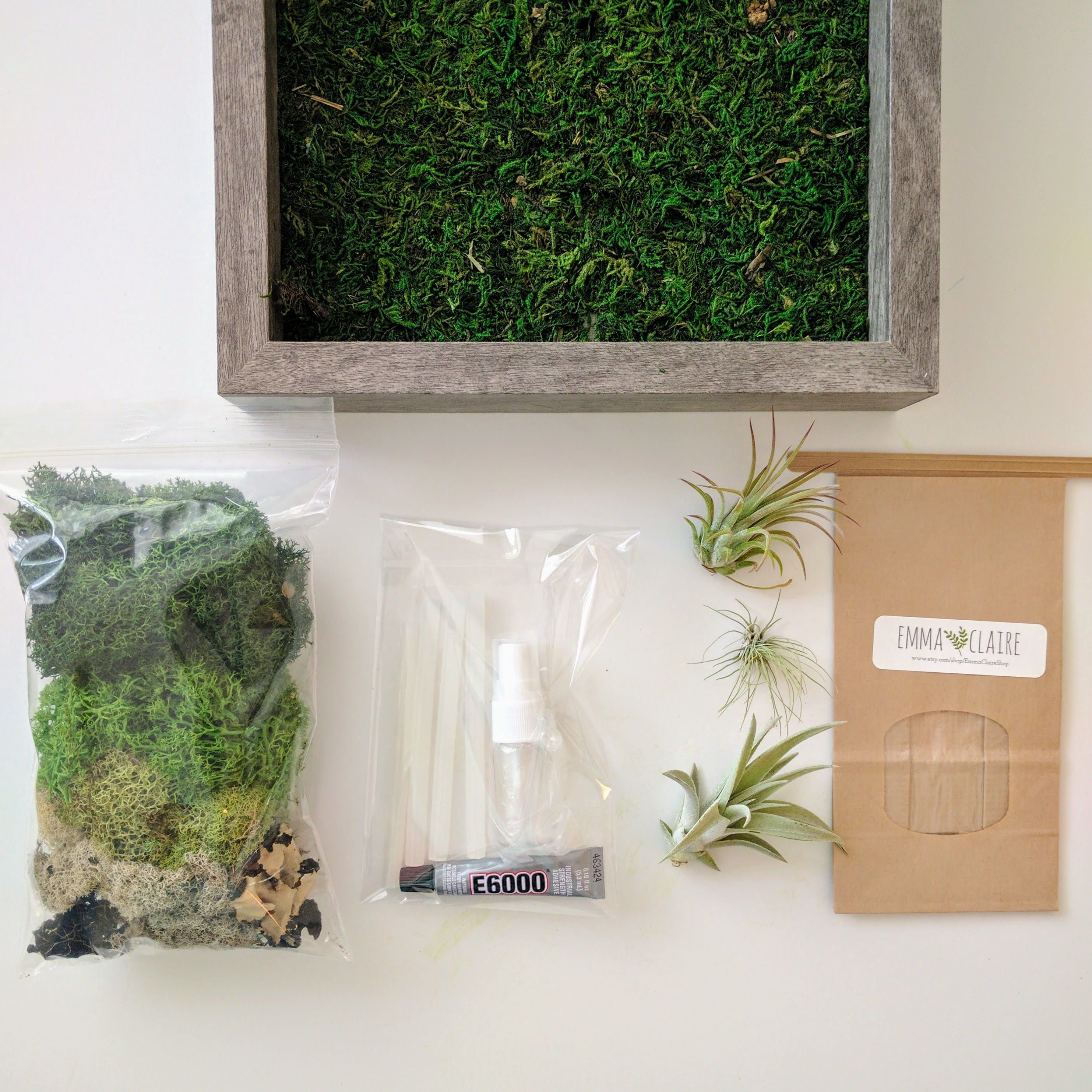 Amazing DIY Framed Vertical Wall Garden Kit With Three Air Plants, Reindeer Moss  And Lichen