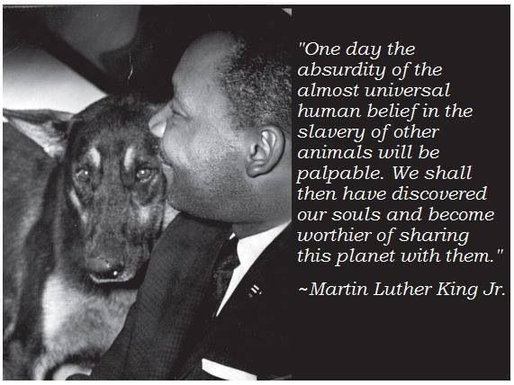 Image Result For Martin Luther King S Animal Quotes Greyt