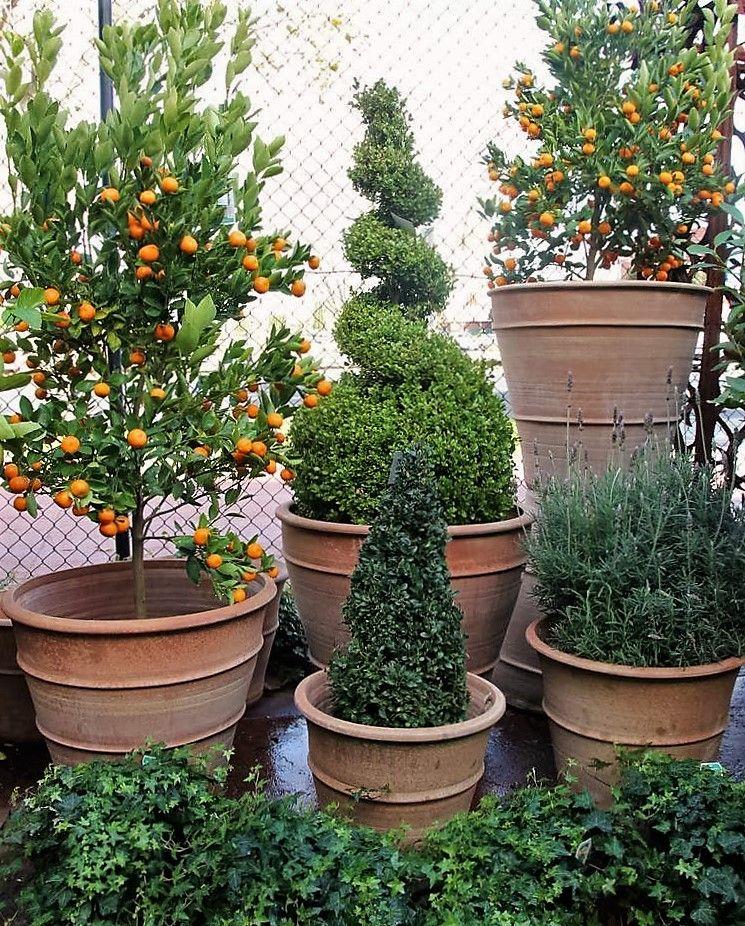 Cretan Pots | Commercial landscape design, Garden design
