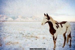 Happy horses in snow