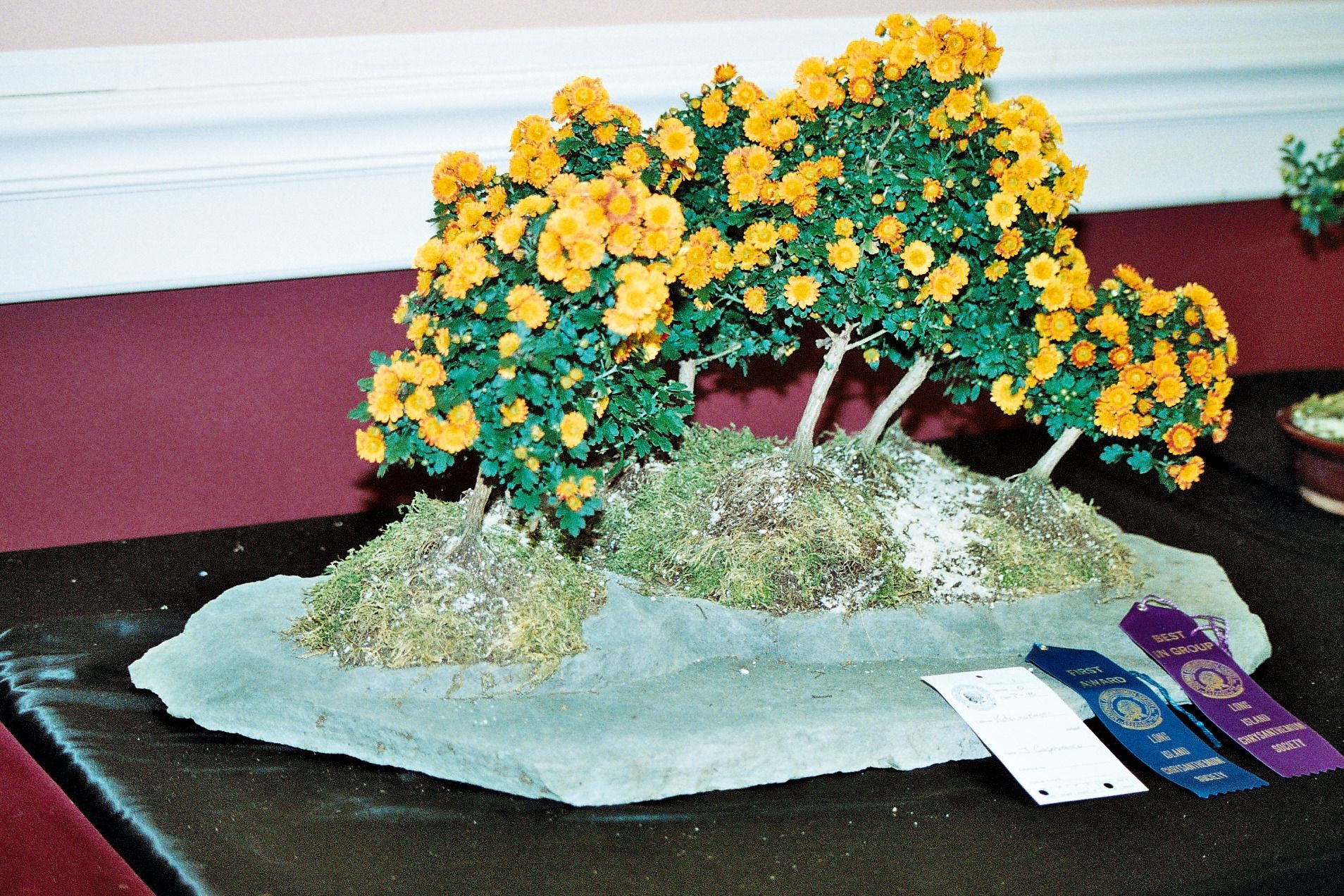 Bonsai Chrysanthemum Grown And Photographed By John Capobianco Chrysanthemum Growing Chrysanthemum Floral Wreath