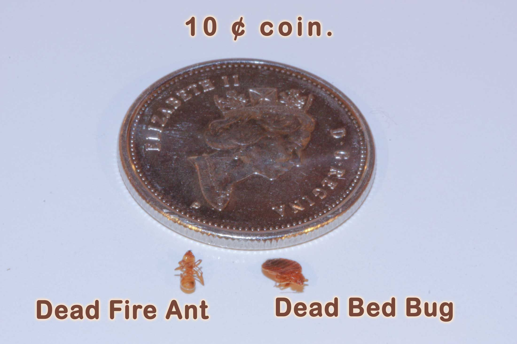 MONTREAL BED BUGS, TORONTO PEST CONTROL, TORONTO BED BUGS