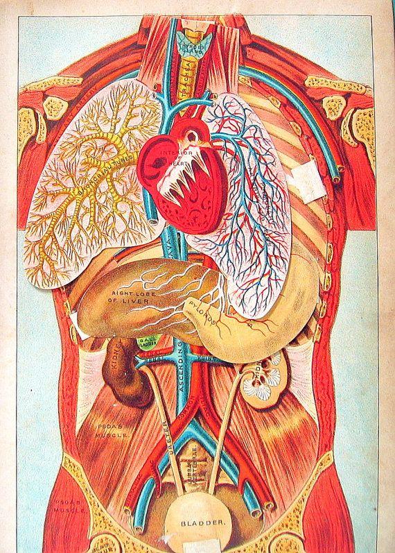 Anatomy Body Parts 1898 Antique Color Print by mysunshinevintage