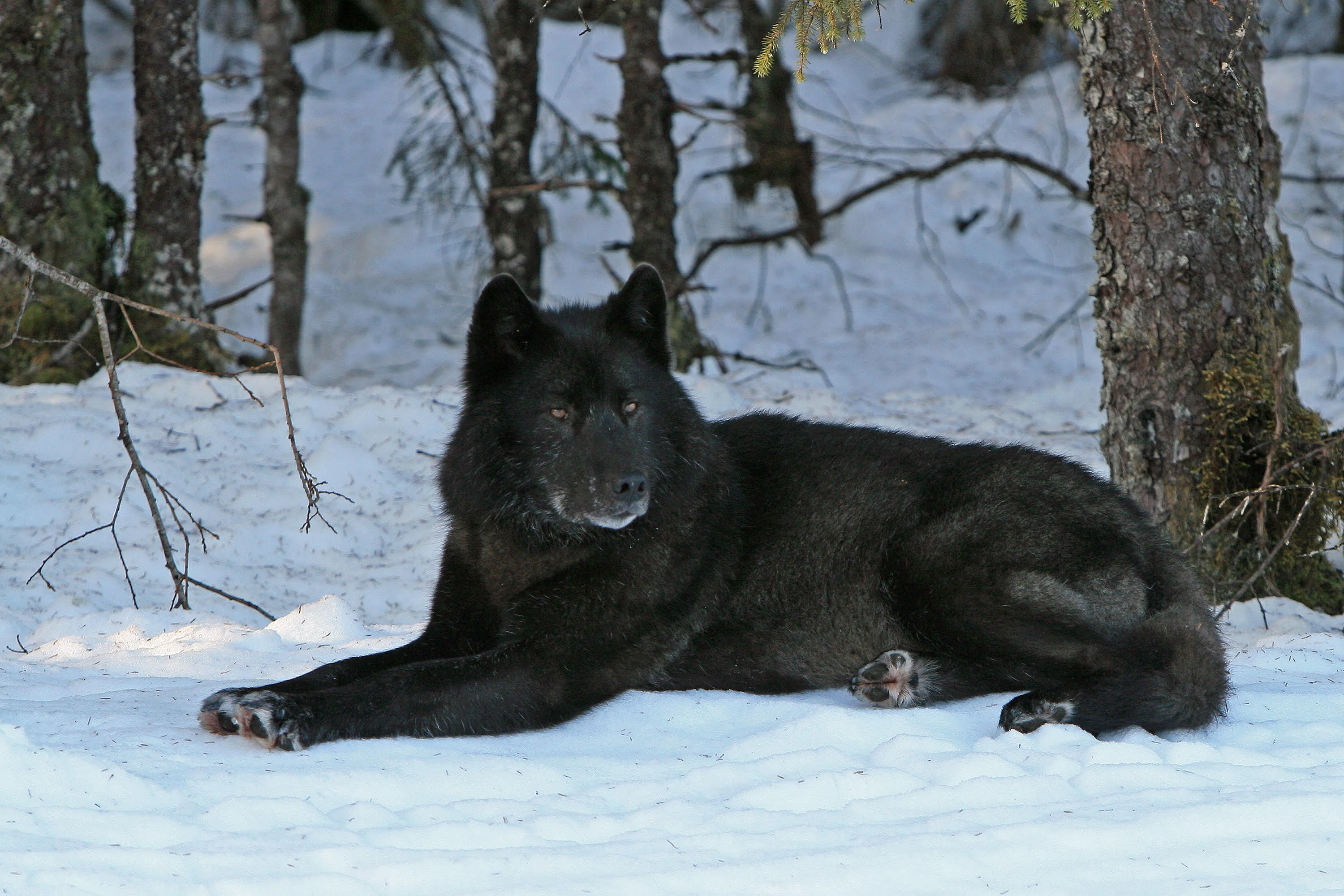 Support Wilmer Valderrama's Fight to Keep Gray Wolves on